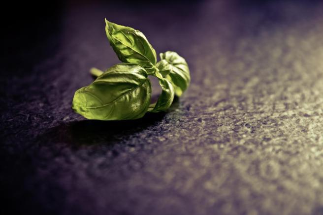 basil_spice_plant_food